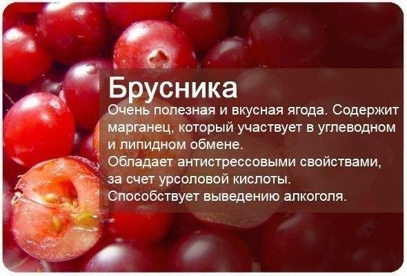 fructi2