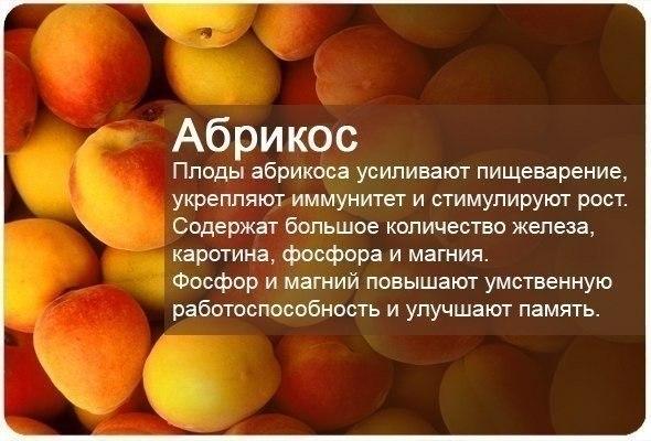 fructi6
